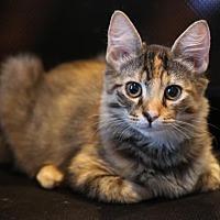 Adopt A Pet :: Winnie - Philadelphia, PA