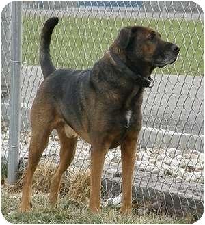 Shepherd (Unknown Type) Mix Dog for adoption in Meridian, Idaho - Rosco
