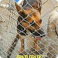 Adopt A Pet :: Dirk - McKinney, TX
