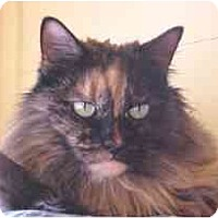 Adopt A Pet :: Ginger - Lunenburg, MA