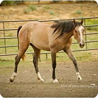 Adopt A Pet :: Eve - Durango, CO