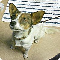 Adopt A Pet :: Hailey - Chesapeake, VA