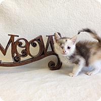 Adopt A Pet :: Elizabeth Swan - Coral Springs, FL