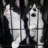 Adopt A Pet :: Ronald Reagan - Albemarle, NC