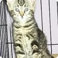 Adopt A Pet :: Indiana - Harrisburg, NC