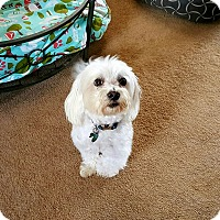 Adopt A Pet :: Kai - Freeport, NY