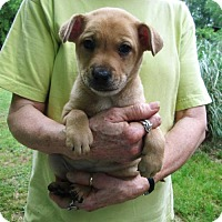 Adopt A Pet :: CHARLEMAGNE - Lincolndale, NY