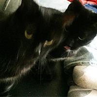 Adopt A Pet :: Artemus - Naugatuck, CT