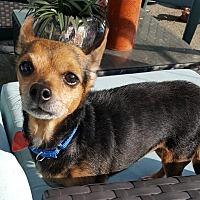 Adopt A Pet :: AUTUMN - Los Angeles, CA