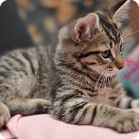 Adopt A Pet :: AC DC - Sparta, NJ