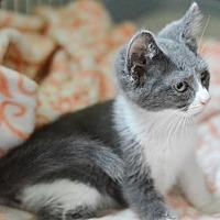Adopt A Pet :: Namer - Santa Monica, CA
