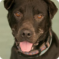 Adopt A Pet :: Mysterio - Roanoke, VA