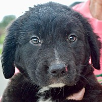 Adopt A Pet :: Lance - Springfield, MA