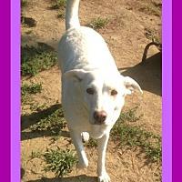Adopt A Pet :: CABELA - Sebec, ME