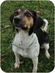 Beagle Mix Dog for adoption in Shelbyville, Kentucky - Dawn