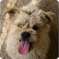 Adopt A Pet :: Buddie - Fowler, CA
