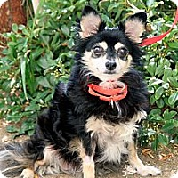 Adopt A Pet :: Rita - Mission Viejo, CA