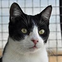 Adopt A Pet :: PEPSI - Alamogordo, NM