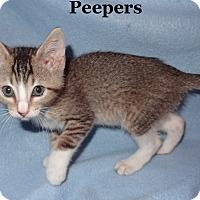 Adopt A Pet :: Peepers - Bentonville, AR