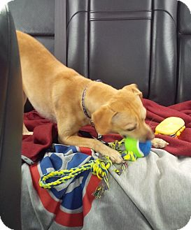 Terrier (Unknown Type, Small) Mix Dog for adoption in San Francisco, California - Charlie 2