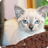 Adopt A Pet :: London - Ann Arbor, MI
