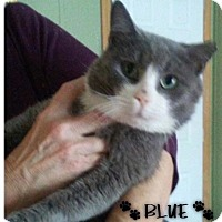 Adopt A Pet :: Blue - Great Neck, NY