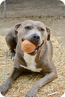 Mixed Breed (Medium) Mix Dog for adoption in Santa Barbara, California - Lucy - Waived Adoption Fee