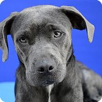 Adopt A Pet :: NYLA - LAFAYETTE, LA