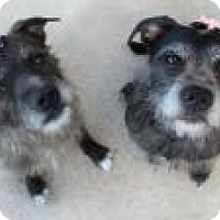 Adopt A Pet :: Jessie and Camille - Yukon, OK