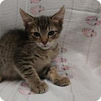Adopt A Pet :: Skeeter - Gulfport, MS
