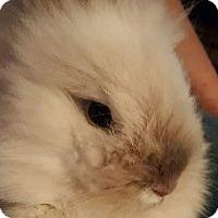 Adopt A Pet :: Mariah - Holbrook, NY