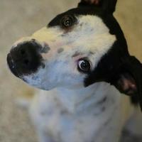Adopt A Pet :: Lorelai - Aiken, SC