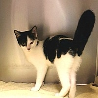 Adopt A Pet :: Katy Purry - Americus, GA