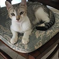Adopt A Pet :: Isabella - Harrison, NY