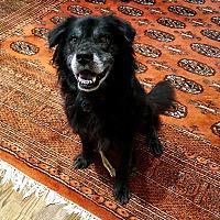 Adopt A Pet :: Eli - Sagaponack, NY
