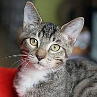 Adopt A Pet :: Drizzle - Pacific Grove, CA