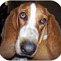Adopt A Pet :: Thelma-Liz - Phoenix, AZ