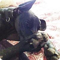 Adopt A Pet :: Kira - Albuquerque, NM