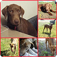 Adopt A Pet :: ABBY - Inverness, FL