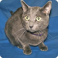 Adopt A Pet :: K-Lillian10-Justin - Colorado Springs, CO
