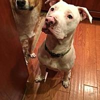 Adopt A Pet :: Truman - Enfield, CT