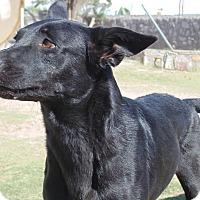 Adopt A Pet :: Rascal - Las Cruces, NM