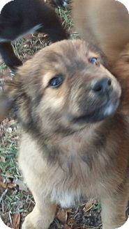 Shepherd (Unknown Type) Mix Puppy for adoption in Sumter, South Carolina - Becky