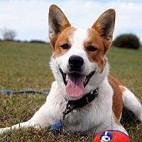 Labrador Retriever Mix Dog for adoption in Washington, D.C. - FOSTER HOMES ALWAYS NEEDED