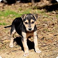 Adopt A Pet :: Slate - South Dennis, MA