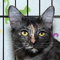 Adopt A Pet :: Echo B - Sacramento, CA