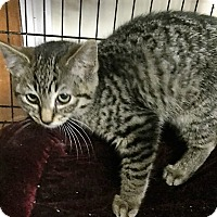 Adopt A Pet :: Lovely - Forest Hills, NY