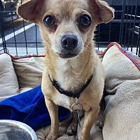 Adopt A Pet :: Nacho - Santa Ana, CA