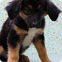 Adopt A Pet :: Maren - Waldorf, MD