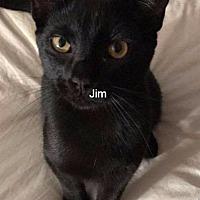 Adopt A Pet :: Jim - Columbus, OH